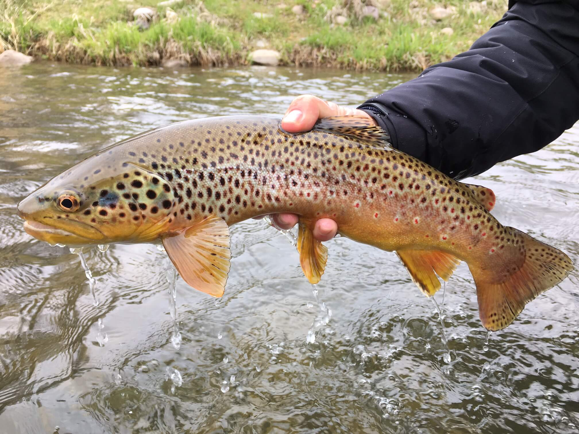 Utah fly fishing report 5 01 16 park city fly fishing for Park city fly fishing