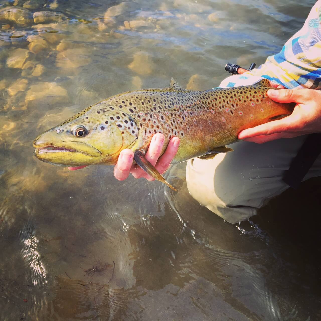 park city fly fishing company utah fly fishing guides