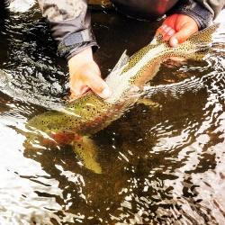 Hamm's fork river rainbow