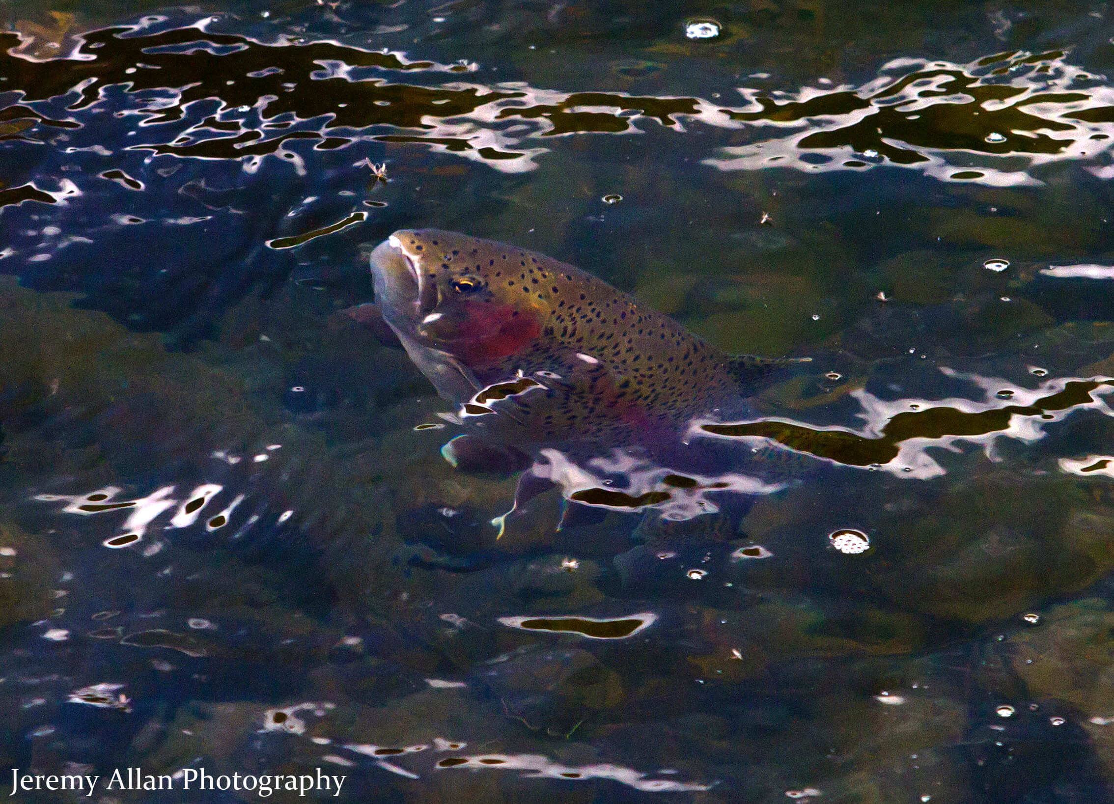 Provo river fishing report 4 01 16 park city fly fishing for Park city fly fishing
