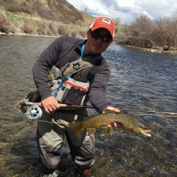 Nice Lower Provo brown trout